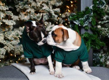 29.11.2018., Zagreb - Odjeca i kreveti za pse. Snailpack svijet stvorile su dvije sestre koje jednostavno obozavaju svoje ljubimce i za koje su iz velike ljubavi osmislile nekoliko proizvoda u kojima oni jednostavno uzivaju. Njihova je misija vlasnicima ljubimaca ponuditi proizvode koji svojim dizajnom, funkcionalnosti i udobnosti cine razliku u moru proizvoda. Kvalitetu svakog proizvoda zele naglasiti odabirom materijala koji su redom iz domace proizvodnje ili pak uvezeni iz kruga europskih zemalja. Inspiraciju za svoj rad pronalaze upravo u ljubimcima i njihovom ritmu zivota. Snailpack proizvodi ne ometaju rutinu vasih ljubimaca - Snailpack je dio njihovog ritma i oni ga jednostavno obozavaju! Photo: Sandra Simunovic/PIXSELL